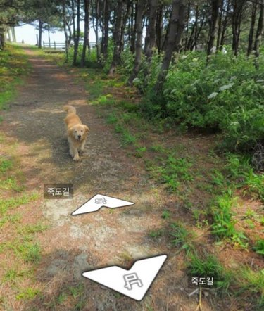 Photobombing doggo brings a flash of color to snaps of Korean island