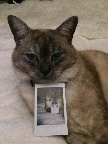Cat with Polaroid of cat