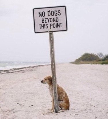 21 Dogs Who Play by Their Own Rules