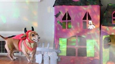 Dog dressed in devil costume