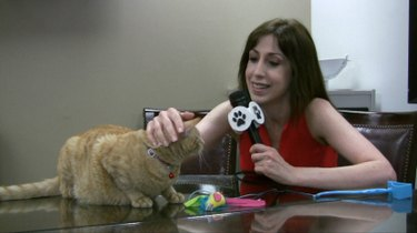Algonquin Hotel welcomes new cat-in-residence