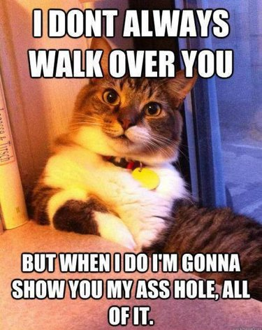 """Cat meme: """"I don't always walk over you, but when I do I'm gonna show you my asshole, all of it."""""""