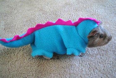 Guinea pig dressed as a dinosaur.