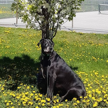Big dog sitting under tree.