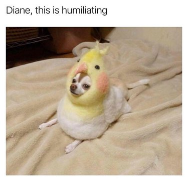 Dog wearing a large bird hat. Caption: Diane, this is humiliating