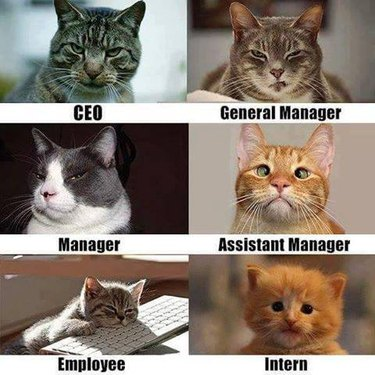 Cats on the employment spectrum meme