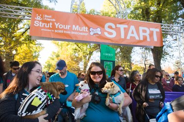 start line happy pups