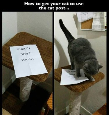 """Sign on scratching post says """"Puddin don't touch"""" Caption: How to get your cat to use the cat post"""