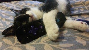 Kitten fell asleep guarding remote control