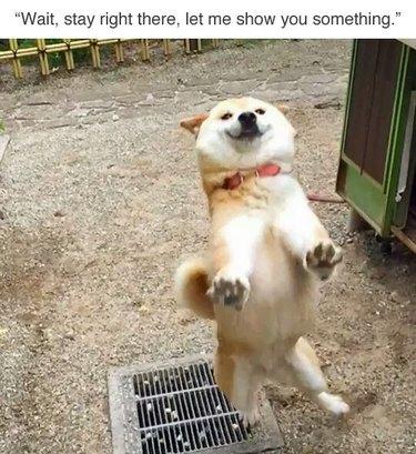 16 Random Hilarious Pet Pics That Will Make You LOL