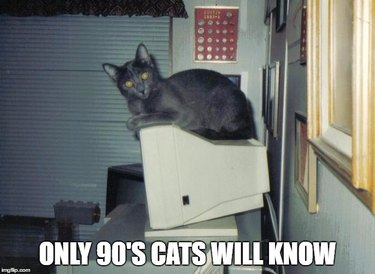 """Cat sitting on a computer from the 90's with text """"Only 90's Cats Will Know."""""""
