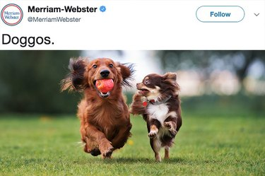 Merriam-Webster Tweeted About the Word Doggo and the Internet Responded Appropriately