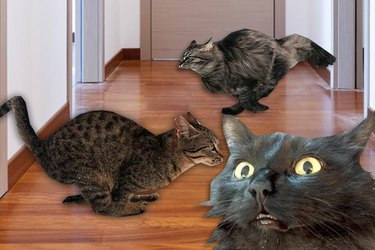 An excited cat reveals the best hallways of 2017 to run up and down at 2 a.m.
