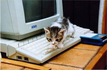 Kitten on a keyboard