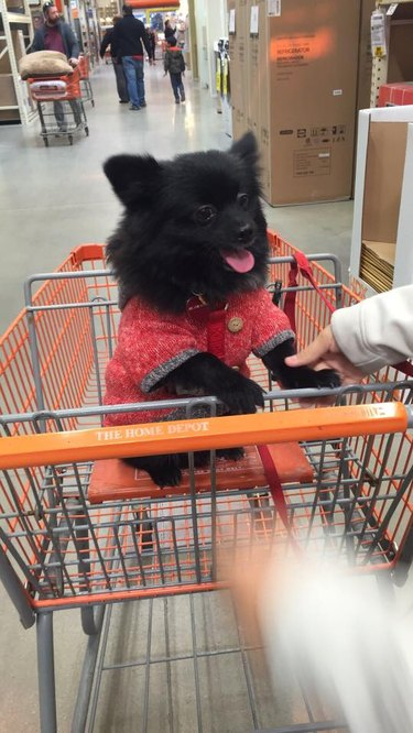 People are sharing pictures of dogs in shopping carts and we're soooo here for it