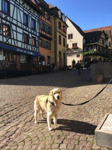 dog photo France