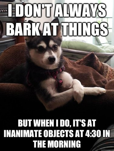 Reasons Why Having a Dumb AF Dog is Awesome!