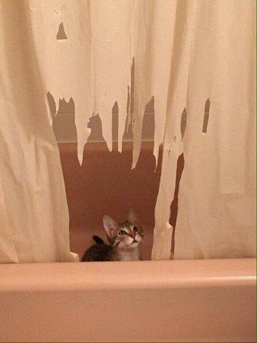Kitten shredding shower curtain (2)