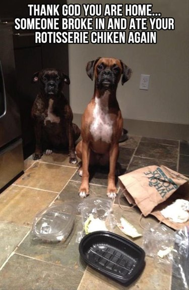 Two dogs look guilty next to empty rotisserie chicken box.