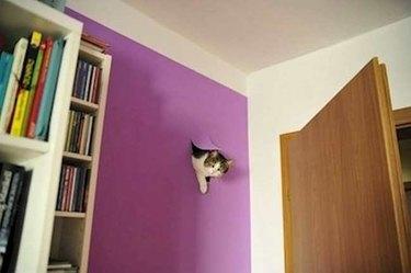 Cat breaking into wall