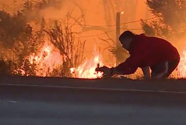 California motorist risks life to save wild rabbit from Ventura wildfire
