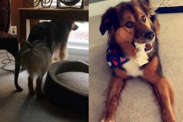 This College Student's Dog Still Waits for Her