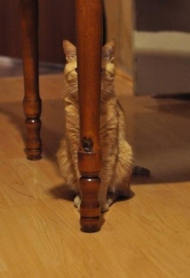 Hidding Cat