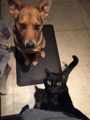Cat and dog begging for food