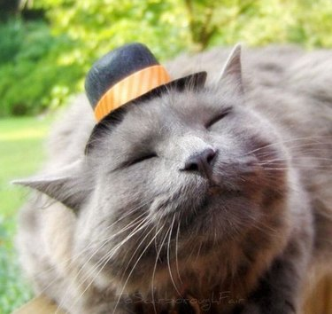 Cat wearing bowler hat.