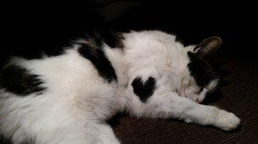 Heart Patch Cat