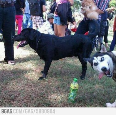 Dog Photobombs That Deserve Awards