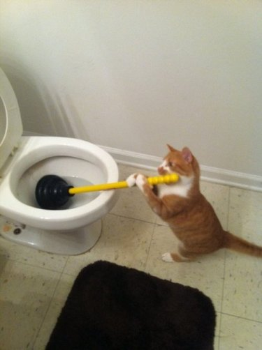 Cat holding plunger.
