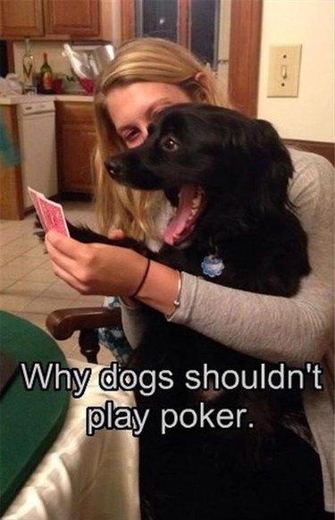 Dog playing poker