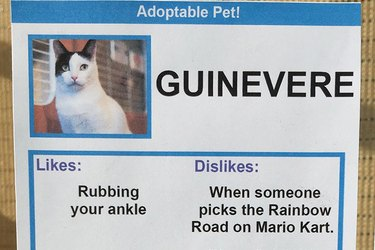 Hilarious Dating Profiles For Cats That Will Make You Want To Adopt Right Meow