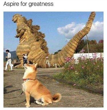 Doge dog arches back like Godzilla