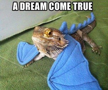 A bearded dragon wearing felt dragon wings.