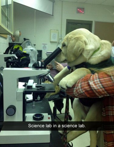 Puppy being held up to look in microscope