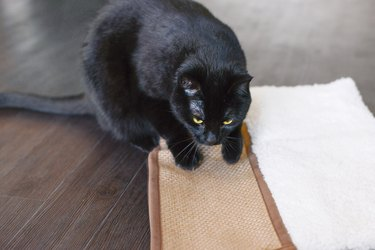 A black cat laying on a scratching pad