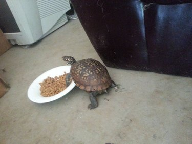 Animals Who Are Expert Food Thieves