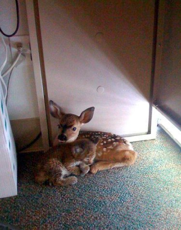 Moments of Animal Affection That Will Melt Your Cold Black Heart