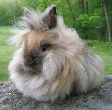 Bunny with hair