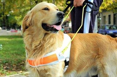 Do Service Dogs Bark?