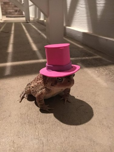 You haven't understood fashion until you've seen a toad in a hat