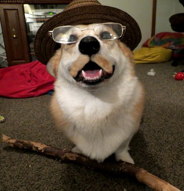 dog big stick