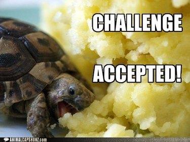 Turtle eats huge pile of mashed potatoes.