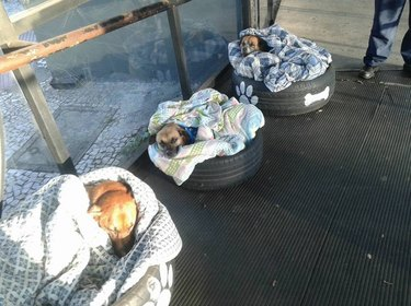 Bus station in Brazil repurposes old tires as beds for stray dogs
