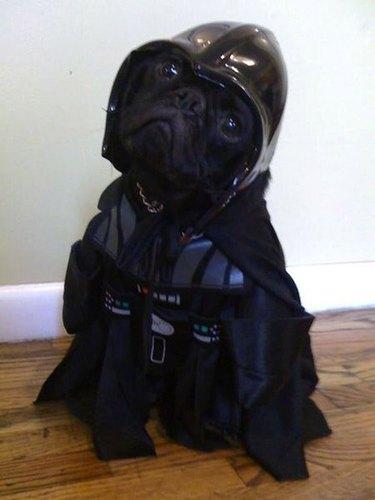 Star Wars Darth Vader pug