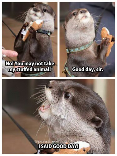 Otter with stuffed animal.