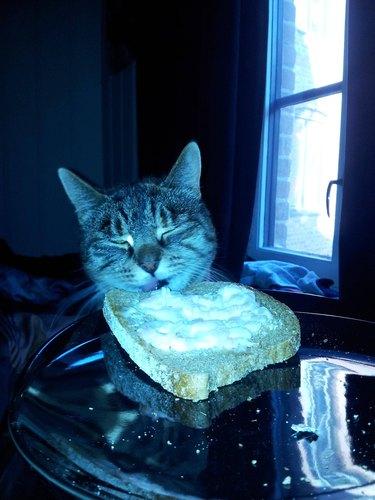 Cat eating toast