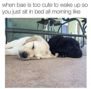 Two puppies side-by-side, one awake, one asleep. Caption: when bae is too cute to wake up so you just sit in bed all morning like